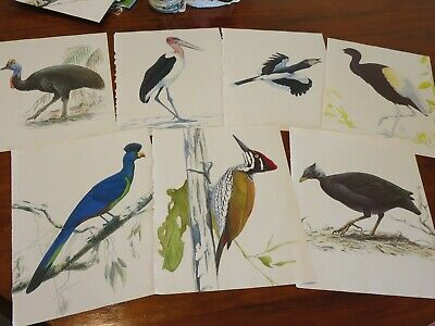 bird prints from old books great for decoupage altered art journals craft 15