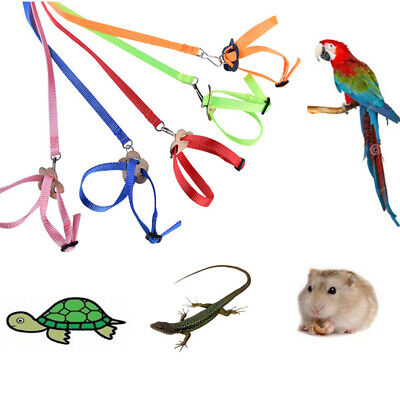 Adjustable Reptile Lizard Parrot Turtle Harness Hauling Cable Rope Pet Leash Hot