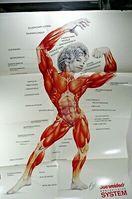Joe Weider's Body Building System Muscular Anatomical Chart Poster by Carnero