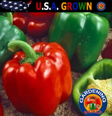 Sweet Bell Pepper Seeds Keystone Resistant 150 SEEDS NON-GMO Green Peppers