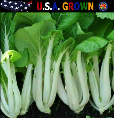 1000 Heirloom Bok Choy Pak Choi White Stem Chinese Cabbage Seeds COMB S/H