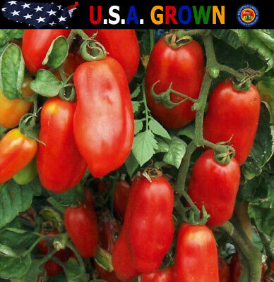 200 San Marzano Italian Tomato Seeds Great For Canning Sauces