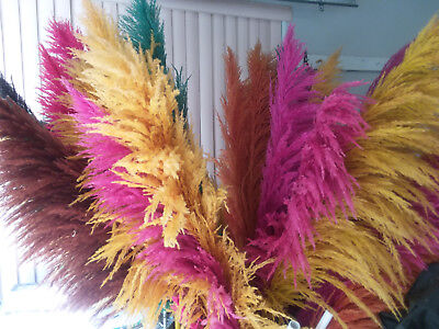 """Dried flower - Box of 6 pampas grass stems 5' feet (60"""") In assorted colors"""