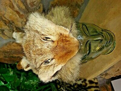 COYOTE SKIN CAP !  Shades of Davey Crockett! Genuine tanned animal hide fur pelt