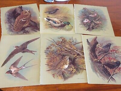 bird prints from old books great for decoupage altered art journals craft 16