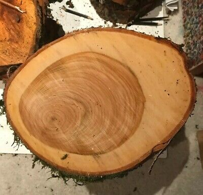 Buy 1 Get 1 Free Fresh Sawn Cherry Timber Planks/Slabs/Boards/Hardwood Rounds
