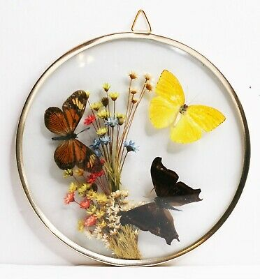 Vintage Butterfly Dried Flowers Shadowbox Framed Taxidermy Wall Art Made Brazil