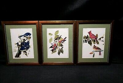 Set of 3 Wooden Framed Bird Prints Bluejay Cardinal Artwork Wall Hanging Picture