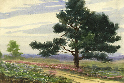 Attrib. Richard Doyle, Fir Tree Sunningdale Berkshire –1877 watercolour painting
