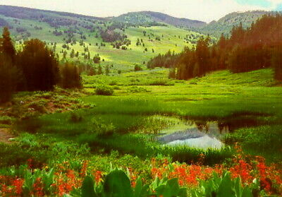 1-acre Farm  WILDERNESS  MODOC COUNTY