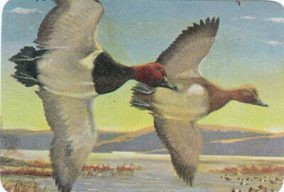 1 Playing Swap Card Us Lithograph B/Back American Geese Starting Migration