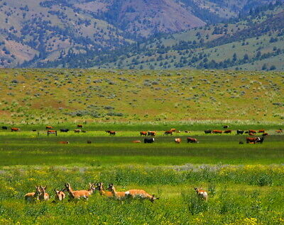 1.47 acres Ranch  WILDERNESS  MODOC COUNTY