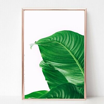 palm leafs leaves print PICTURE WALL ART A4 Botanical plant UNFRAMED 22