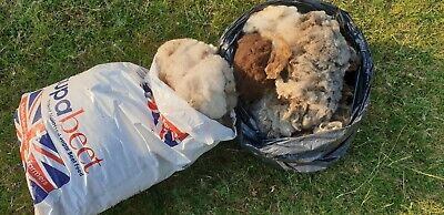 1. Kg Of  raw Shetland sheep fleece