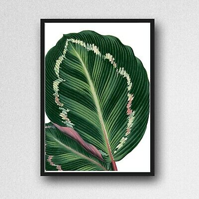 tropical leaf print PICTURE botanical plant A4 unframed wall art poster gloss 23