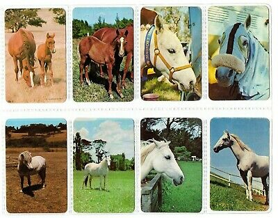 8 Brown & White HORSE HORSES Blank Back Swap Playing Cards