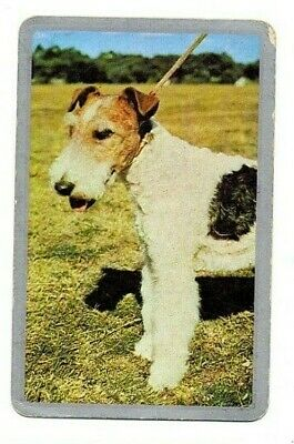 Newsagent TERRIER DOG Silver Border Blank Back Swap Playing Card