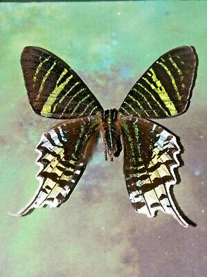 butterfly REAL moth mounted framed lot insect moth lot GIFT INSECT taxidermy art