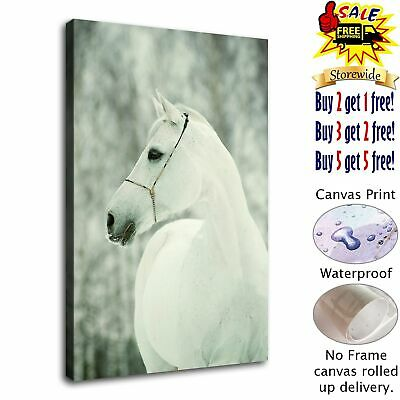 """12""""x18"""" Sad White Horse Picture HD Canvas prints Home decor Room Wall art Poster"""