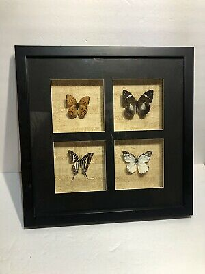 4 Real Butterfly Taxidermy Insect in Frame Entomology Gift Collectible Decorate