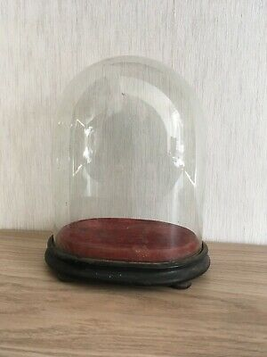 Antique Victorian Oval 8.5 inch Glass Dome +original Base(22cm high by 18 by 13)