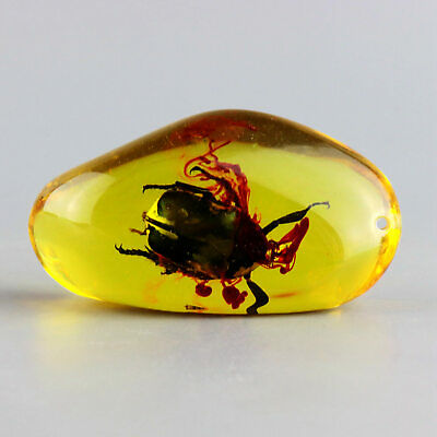 Collectable Handwork China Old Amber Inside Inlay Insect Delicate Rare Pendant