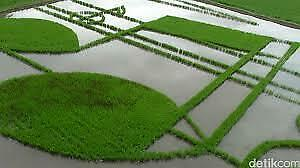 New Very cool rice fields