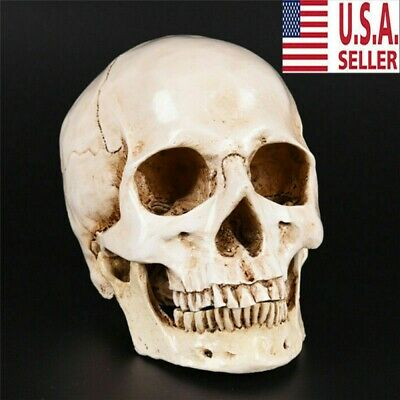 Realistic Retro Human Skull Replica 1:1 Resin Model Art Teach Medical Life Size