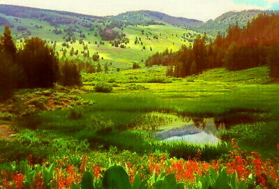 1 ACRE  Quality of Life in the Wilderness MODOC COUNTY