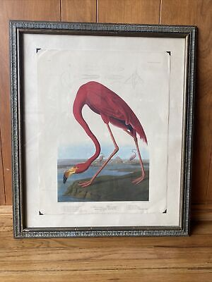 "Audubon The American Pink Flamingo Painting 12.5/"" x 17/"" Real Canvas Art Print"