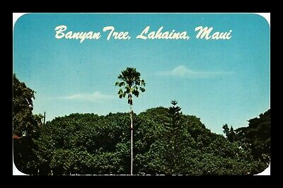 Dr Jim Stamps Us Banyan Tree Lahaina Maui Hawaii Chrome View Postcard