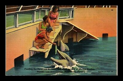 Dr Jim Stamps Us Feeding Porpoises Marineland Florida Linen Postcard