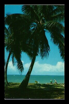 Dr Jim Stamps Us Coconut Palm Trees Florida Chrome View Postcard