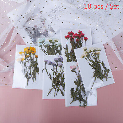 10x/pack Pressed Flower Dried Flowers for DIY Phone Case Bookmark Scrapbookin FR