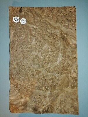 CONSECUTIVE SHEETS OF EUROPEAN BURR WALNUT VENEER 20 X 33 cm EU #224 MARQUETRY