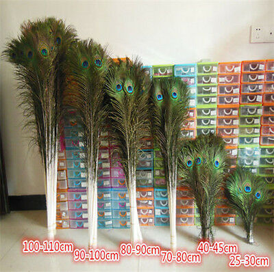 Wholesale 100pcs beautiful natural peacock feathers eyes 10-40 inches /25-100 CM