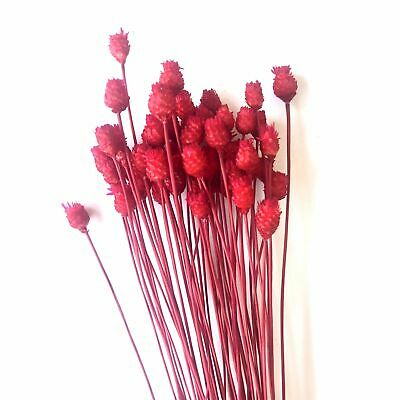 Natural Dry Mini Happy Flower Stems - Red