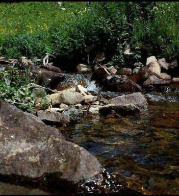 40 Acre Mining Claim for Sale Near Fairplay Colorado