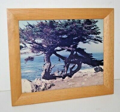 "Cypress Trees in Carmel-By-The-Sea 12"" x 10"" Wood Frame"
