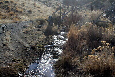 Rosebud Placer 20 Acre Unpatented Gold Mining Claim, Imlay NV Pershing County