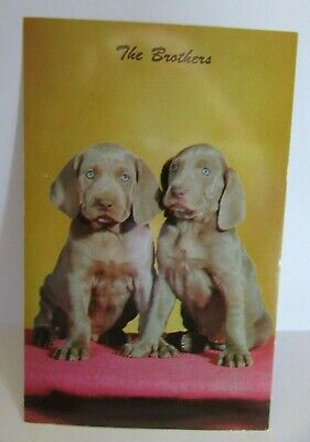 Postcard The Brothers Two Dogs Weimaraner Pups - 155A