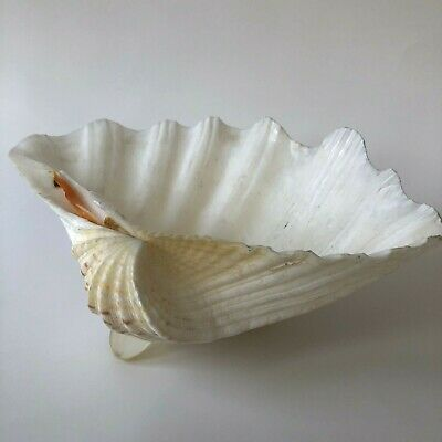 Vtg Real Sea Shell Footed Dish Bowl Tray Holder Nautical Decor Beach Cottage