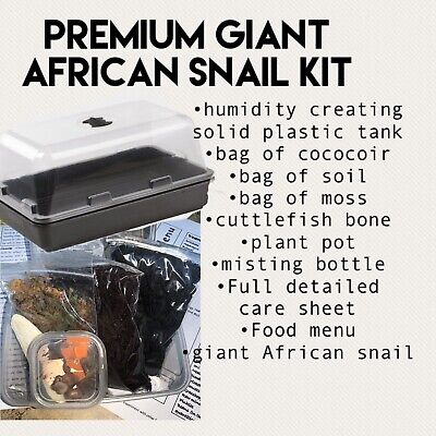 Premium Giant African Land Snail Kit With 1x Giant African Land Snails...