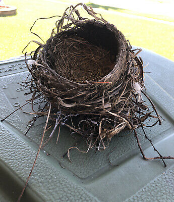 Authentic Real Robin Birds Nest Abandoned Illinois Twigs For Crafts And Decor