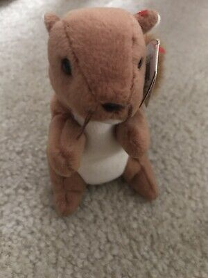 Nuts The Squirrel Beanie Baby