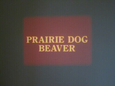 Prairie Dog Beaver Super 8 Colour Sound 200Ft Cine 8Mm Film Wildlife