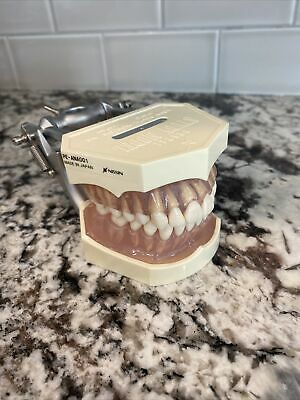 Nissin Dental Study Model With Clear Gingiva And Removable Teeth