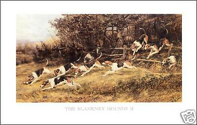 FOXHOUND FOX HUNTING THE BLANKNEY HOUNDS II (Large)