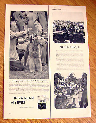 1952 Dash Dog Food Ad  Airedale Terrier Dog