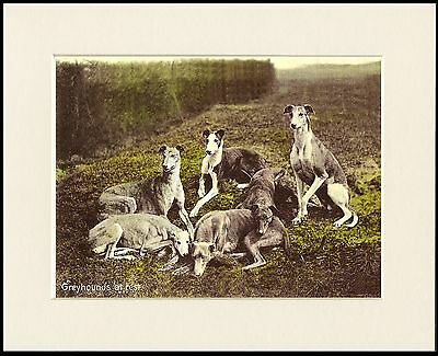Greyhound Lovely Little Dog Print Group On Hillside Mounted Ready To Frame